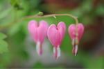 Flower_2009_030