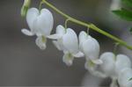 Flower_2009_031