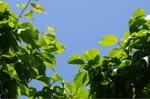 Leaf_003