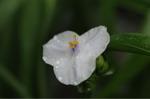 Flower_2009_032