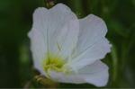 Flower_2009_037