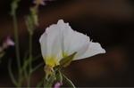 Flower_2009_038