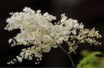 Flower_2009_040