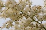 Flower_2009_042