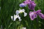 Flower_2009_044