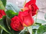 Flower_2007_04