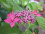 Flower_2007_17
