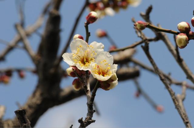 Flower_2008_10