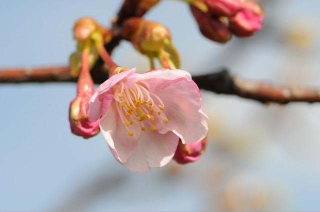 Flower_2008_11