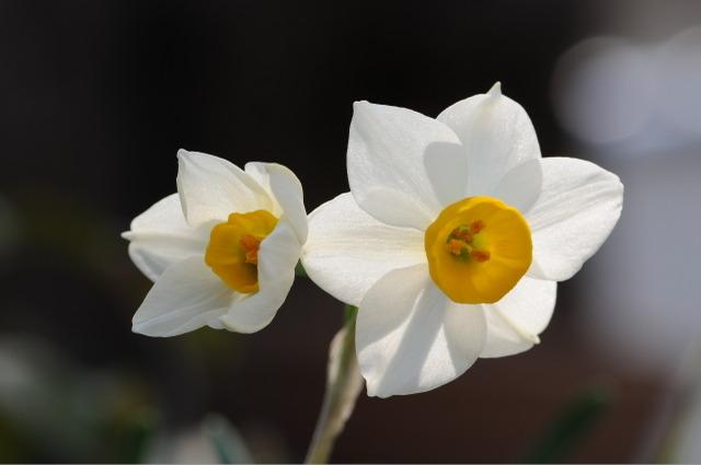 Flower_2008_14