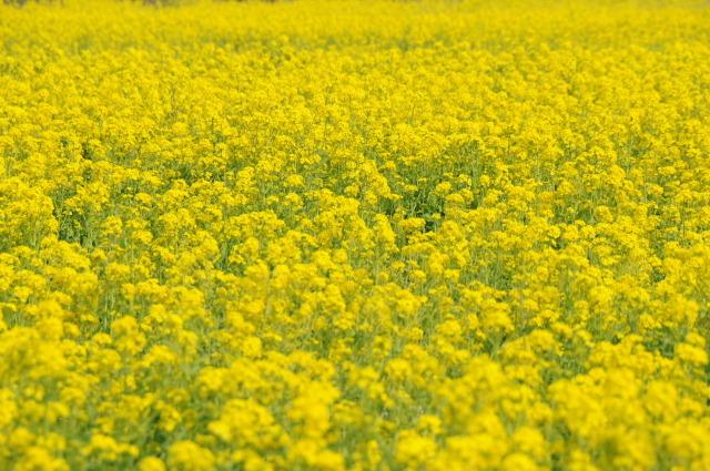 Flower_2008_21