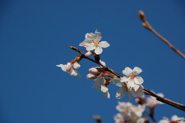 Flower_2008_27