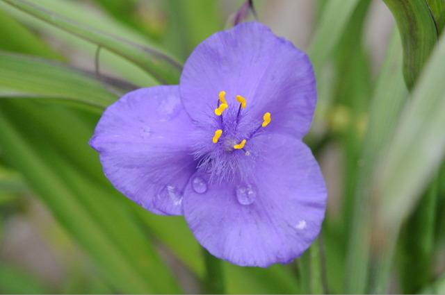 Flower_2008_44
