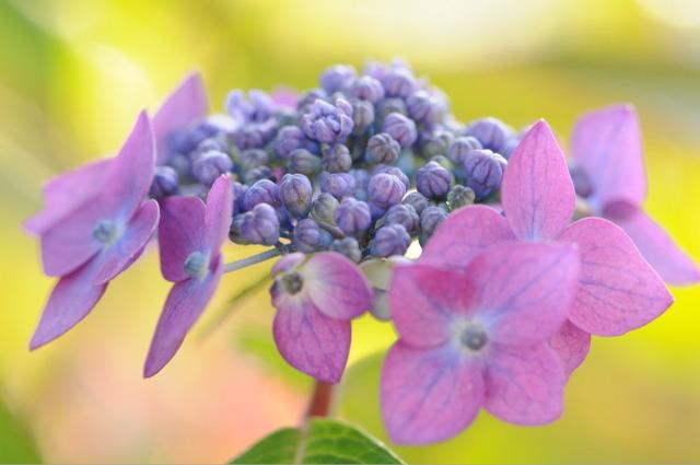 Flower_2008_55